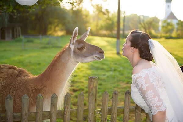 Braut mit Lama